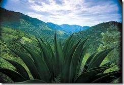 Леса Ямайки