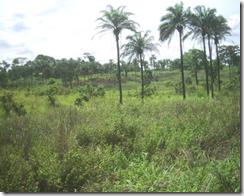 Путешествие в Конго