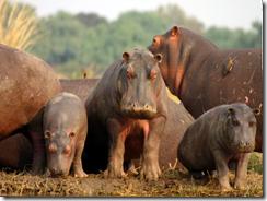 Животный мир Замбии