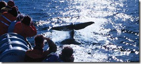 увидеть кита-кашалота