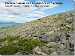 mirarkticheskoipustyni thumb Растительный мир арктических пустынь