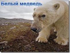 животные арктической пустыни