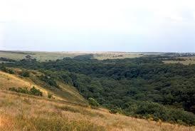 Байрачный лес