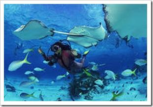 подводный мир острова Бриони