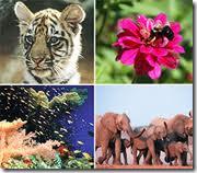 Проблемы биоразнообразия