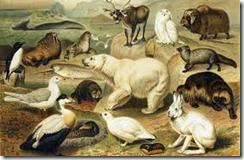 редчайшие и пропадающие виды животных, растений и грибов вписываются в Красные книги